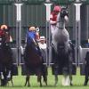"""ゴールドシップの隣に牝馬、レース前に""""馬っ気""""炸裂?"""
